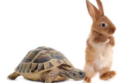 Застольная игра «Быстро или не спеша?»