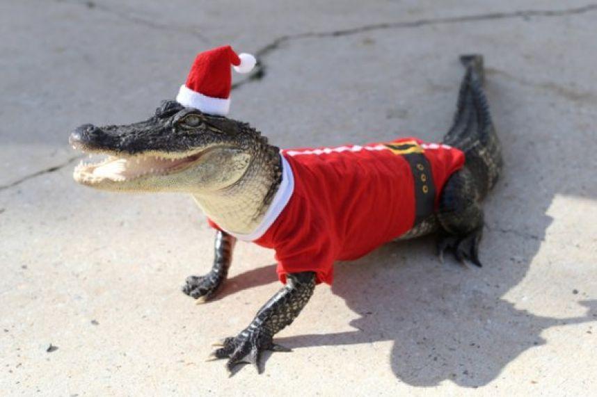 Игра «Новогодний Крокодил»